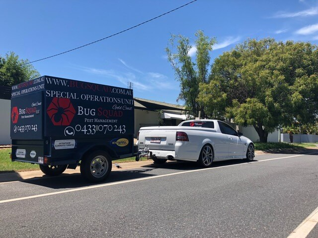 Bug Squad Gold Coast Service