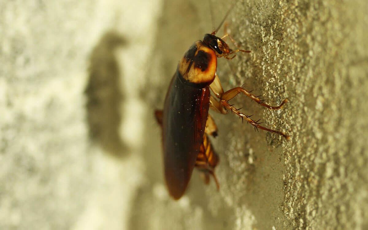 Gold Coast Pest Control Near Me   Bug Squad   Pest Control